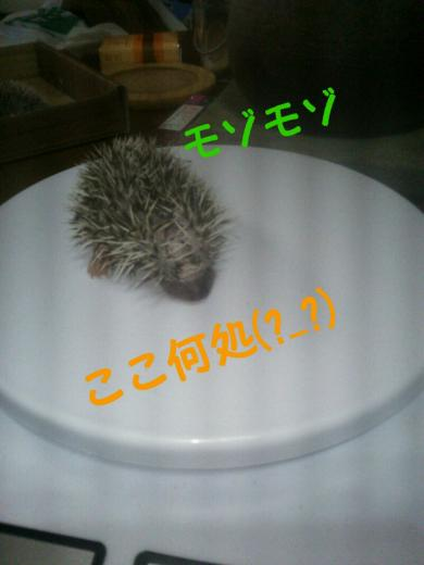 rakugaki_20141205125754611_convert_20141206152257.jpg