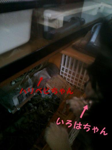 rakugaki_20141213142325728_convert_20141214143819.jpg