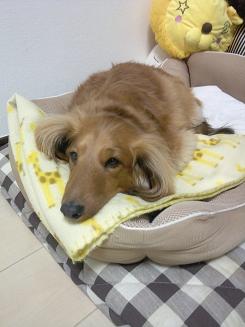 幸アニキの寝床