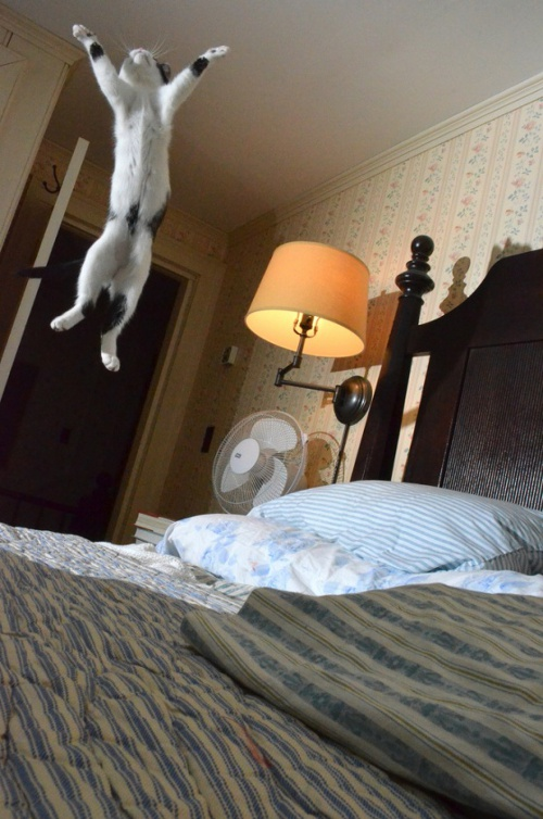見てると思わずジャンプしたくなる!元気に飛び跳ねる猫たち