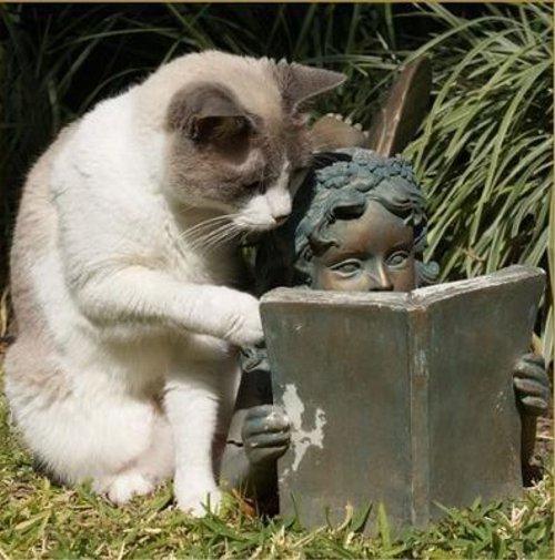 先生のような猫