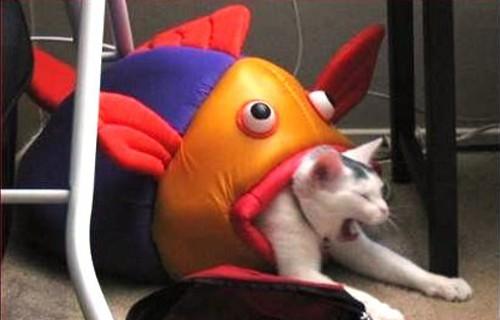 魚に襲われた猫が話題に