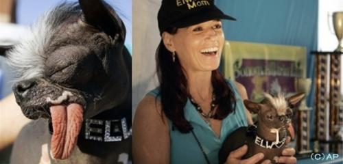 「世界で最も醜い犬」 エルウッドが亡くなる