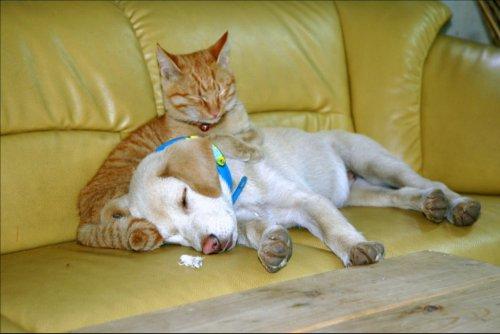 「動物愛護管理法」の改正で犬猫の殺処分縮小に期待