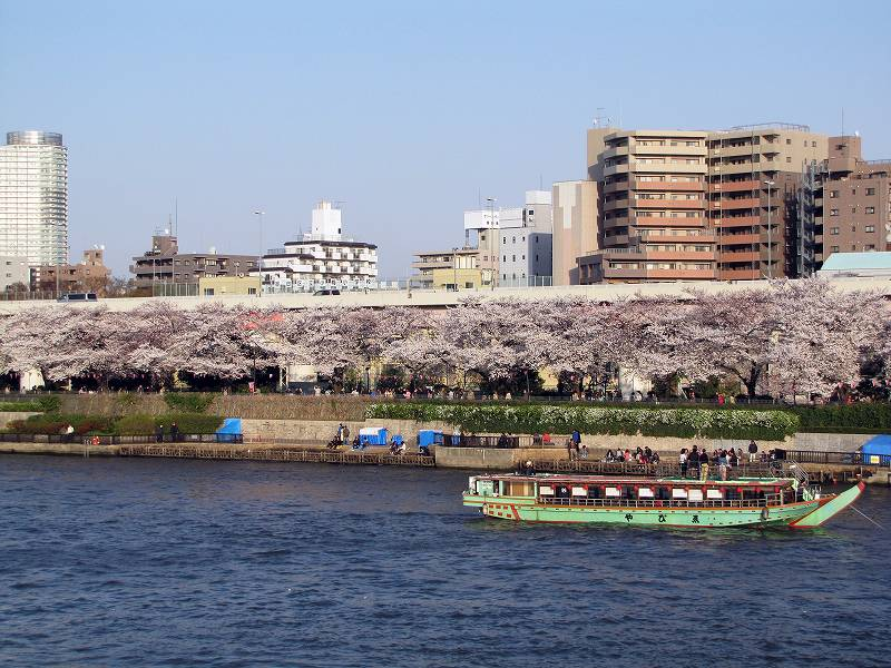 隅田川の桜2