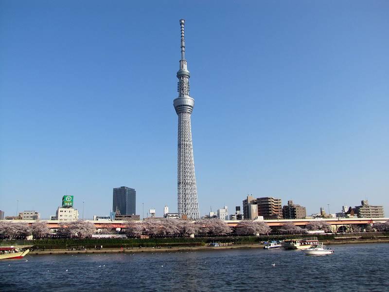隅田川の桜1