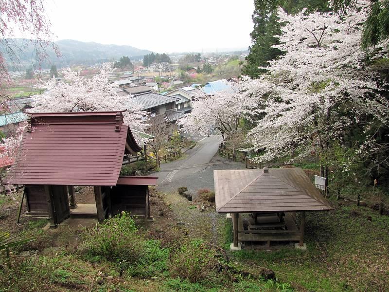 秩父・荒川の桜4