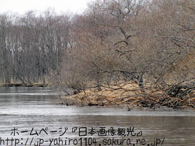 北海道・湿原を流れる釧路川