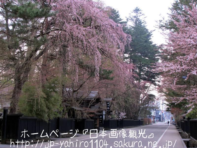 秋田・角館武家屋敷と桜2