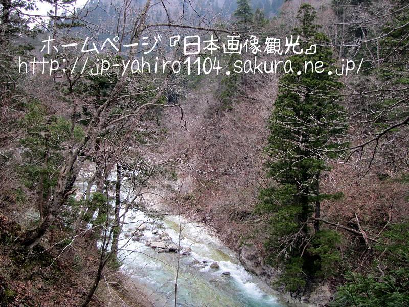 秋田・白神山地、太良峡と自然の秋田杉