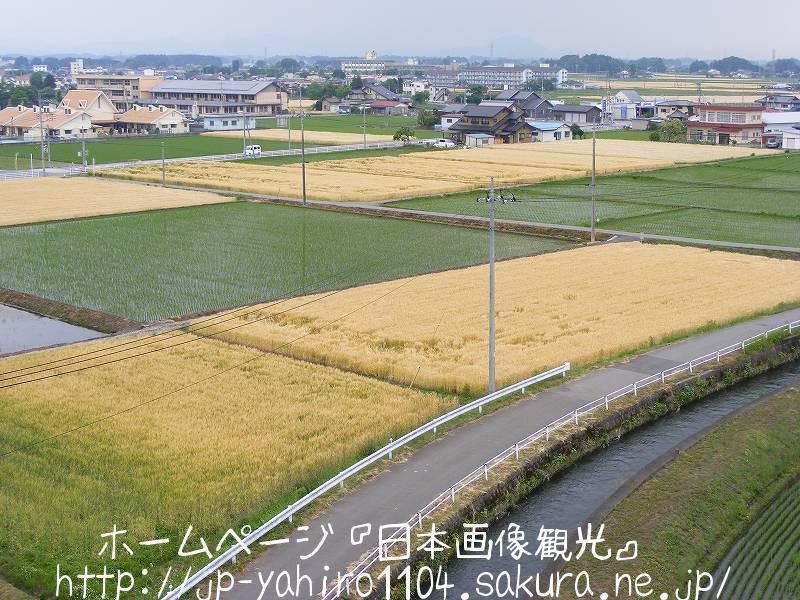 栃木・高根沢町のパッチワーク田んぼ2