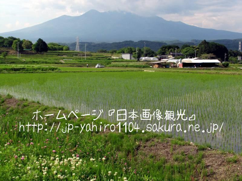 山梨・八ヶ岳と緑の田んぼ