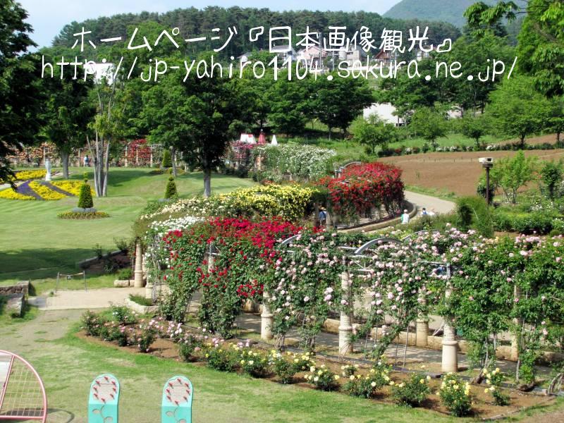 山梨・県立フラワーセンター(日本一のバラ回廊)2