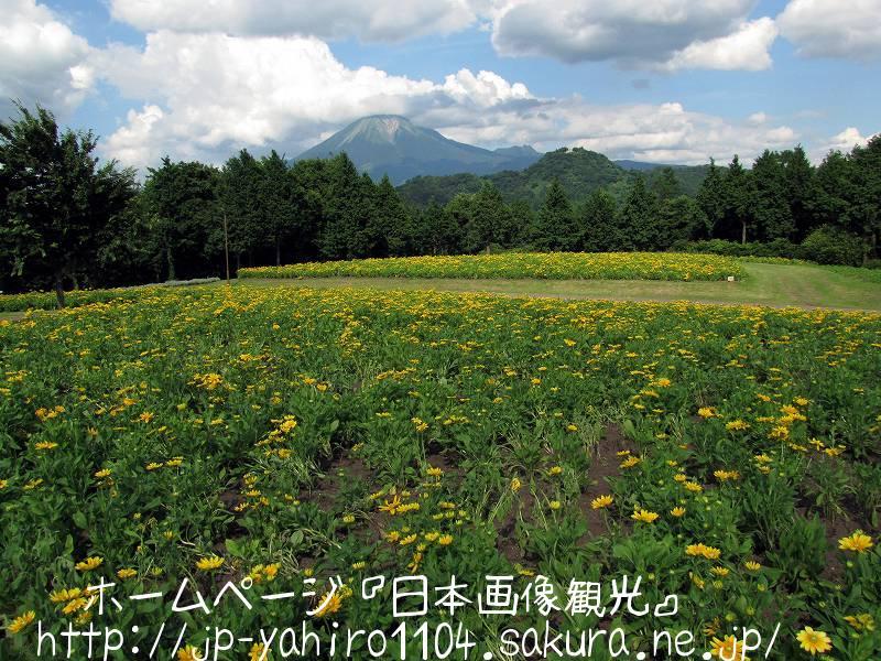 鳥取・とっとり花の回廊から見た大山3