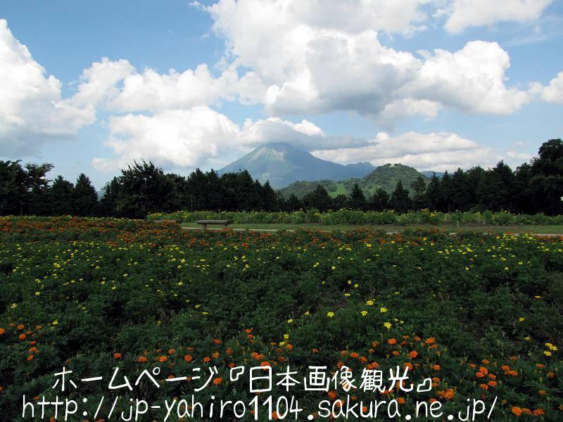 鳥取・とっとり花の回廊から見た大山4