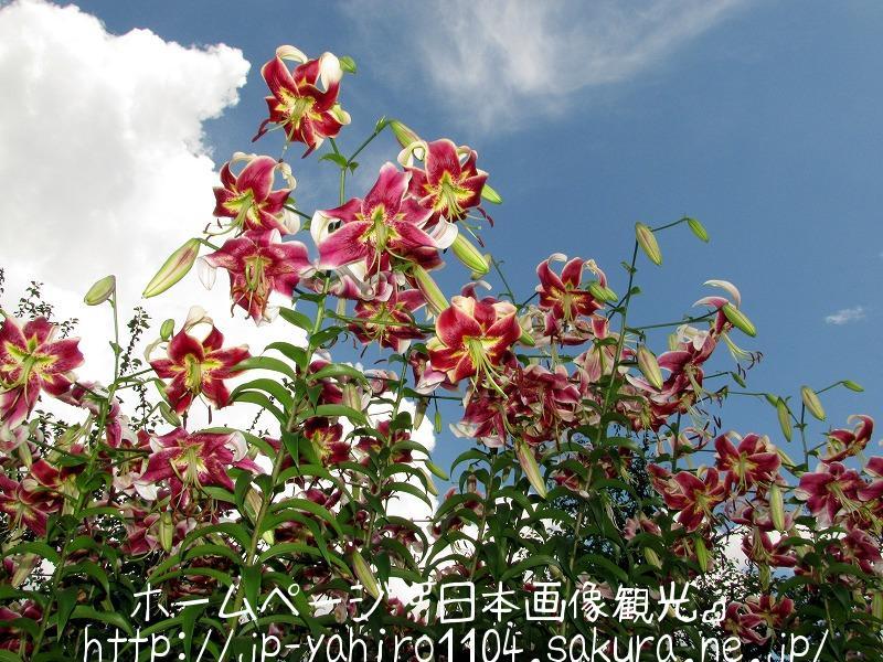 鳥取・とっとり花の回廊で咲いていた花たち2