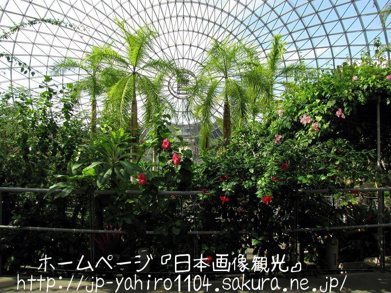 鳥取・とっとり花の回廊で咲いていた花たち3