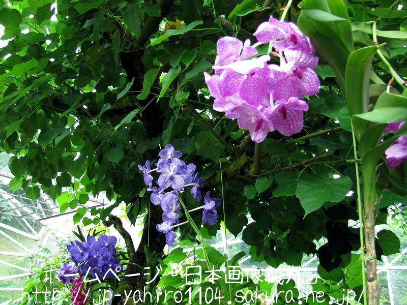 鳥取・とっとり花の回廊で咲いていた花たち1