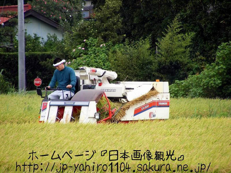 千葉・関東で一番早いお米の検査3