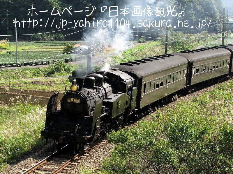 静岡・大井川鉄道のSL