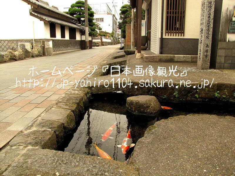 長崎・島原の鯉の泳ぐ街1