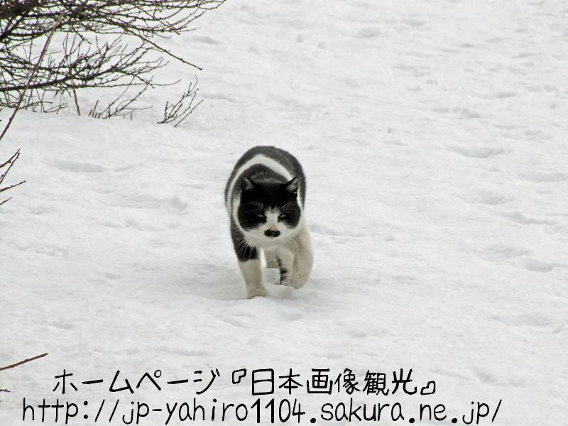 北海道・極寒の釧網本線茅沼駅のノラ猫1