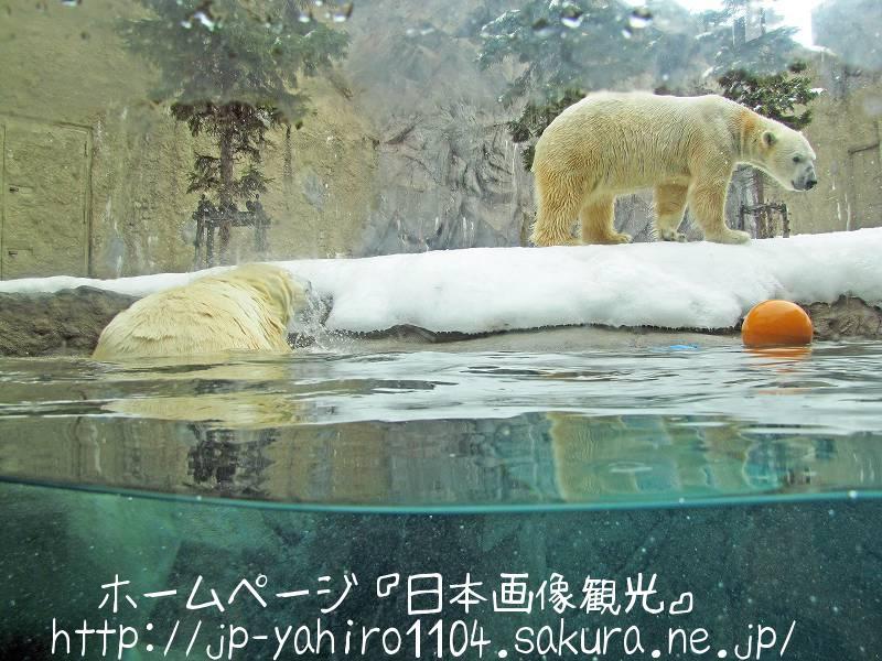 北海道・旭山動物園のほっきょくぐま館2