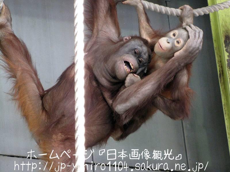 北海道・旭山動物園のおらんうーたん館2
