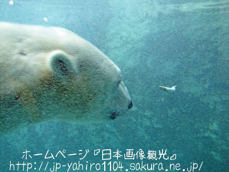 北海道・旭山動物園の動物たちのドアップ写真1