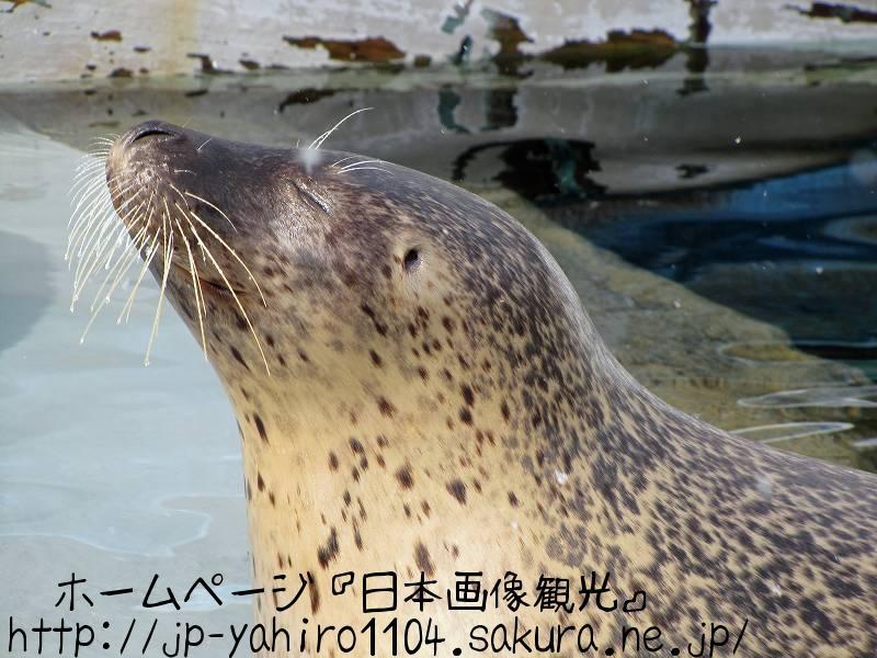北海道・旭山動物園の動物たちのドアップ写真2