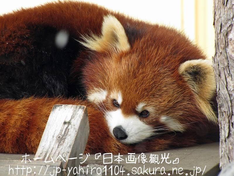 北海道・旭山動物園の動物たちのドアップ写真5