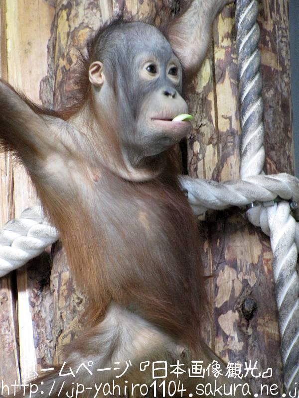 北海道・旭山動物園の動物たちのドアップ写真7