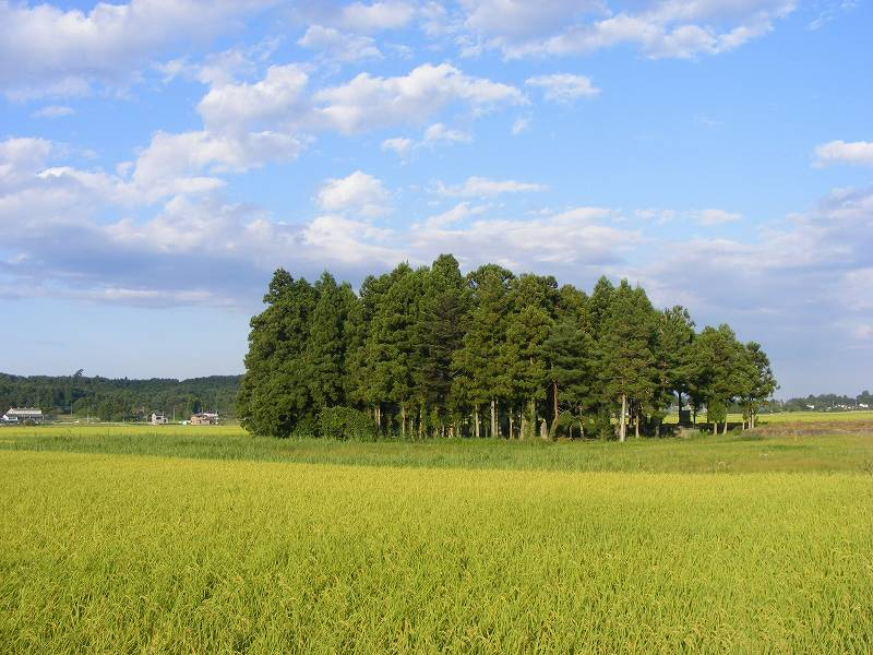 福島【過去画像】在りし日の相馬市の田んぼ1