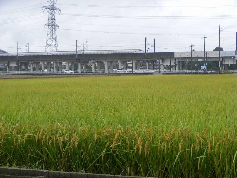 栃木・台風接近中のなかでの新幹線と田んぼ