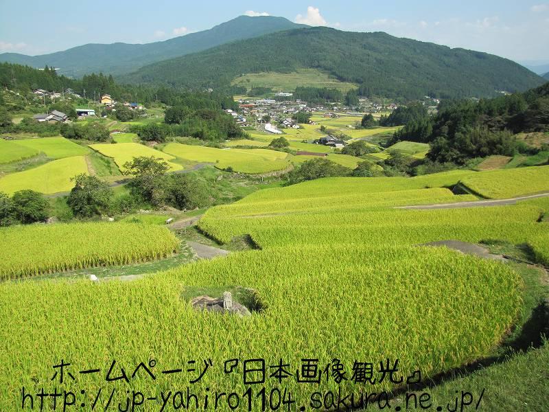 岐阜・棚田百選、坂折の棚田2