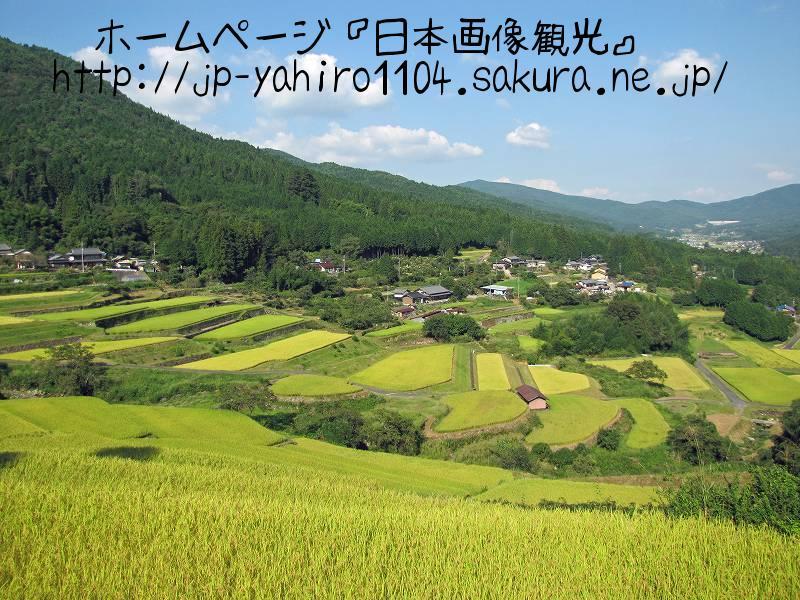 岐阜・棚田百選、坂折の棚田3