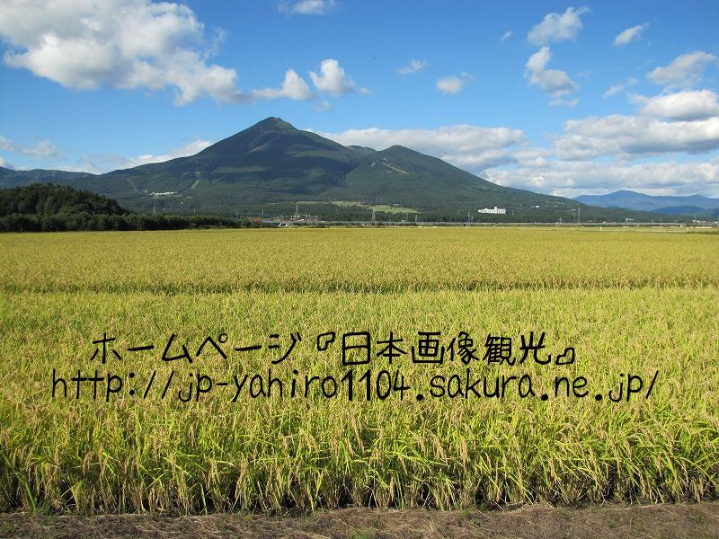 福島・会津磐梯山と黄金の穂2