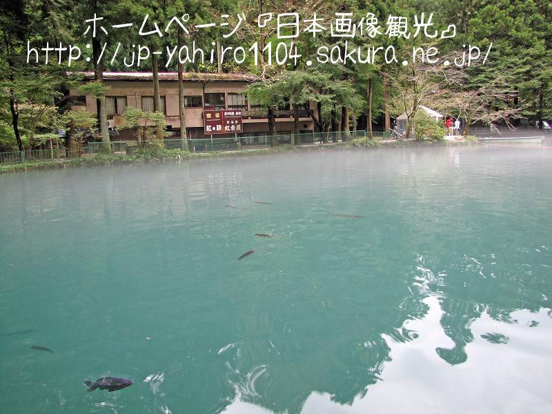 滋賀・国の名勝、醒ヶ井渓谷と醒ヶ井養鱒場3