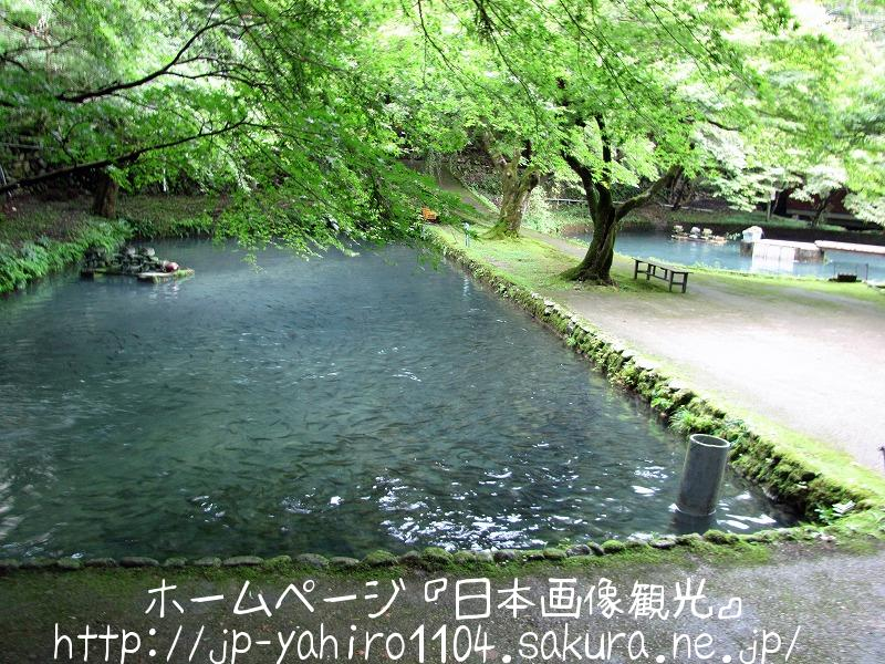 滋賀・国の名勝、醒ヶ井渓谷と醒ヶ井養鱒場4