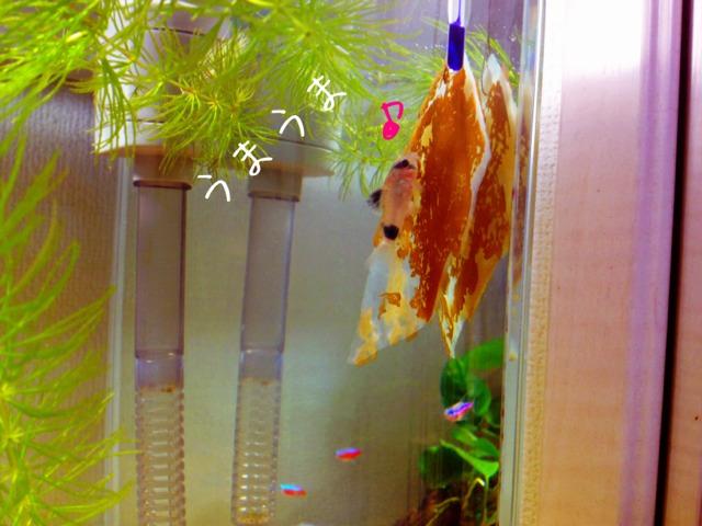 fc2blog_20120930000327400.jpg