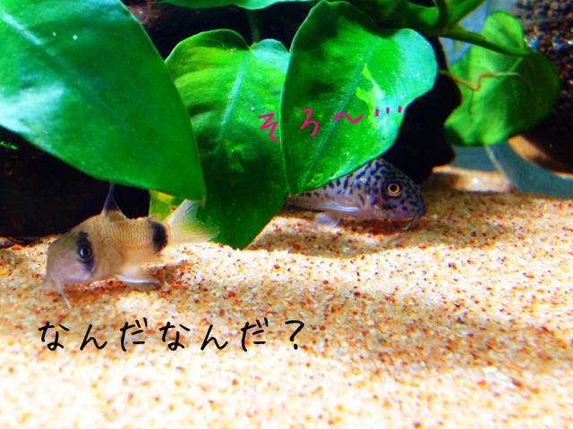 fc2blog_20121007212146e67.jpg