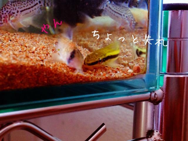 fc2blog_201210122221280f2.jpg