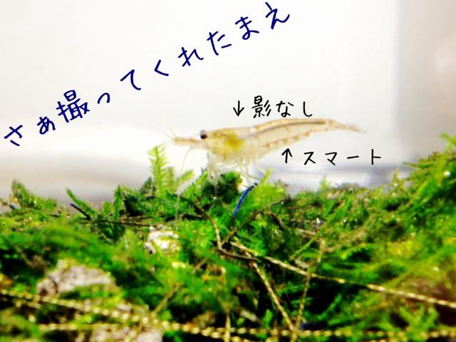 fc2blog_201210162057488e3.jpg