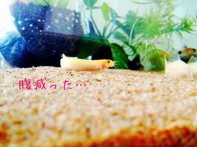 fc2blog_201210201111124e1.jpg