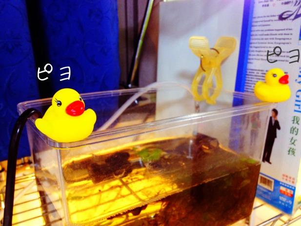 fc2blog_20121118200710610.jpg