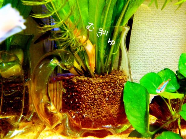 fc2blog_20121118210153d9e.jpg
