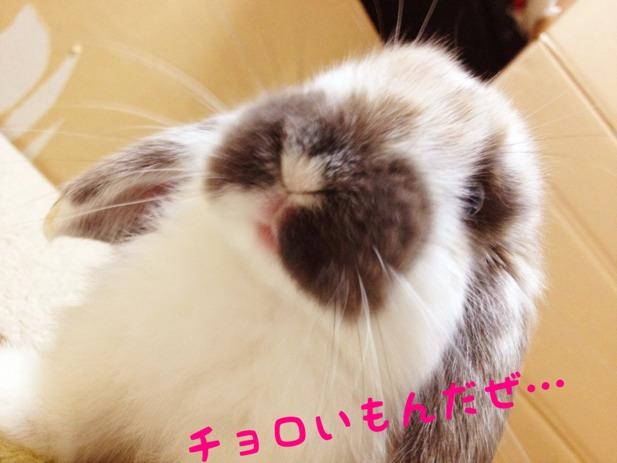 fc2blog_2012120116090841f.jpg