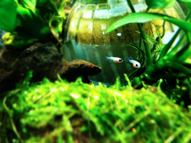 fc2blog_20121231173700785.jpg