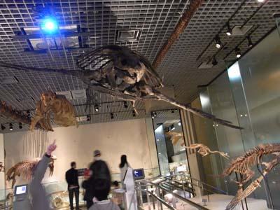 恐竜化石.jpg
