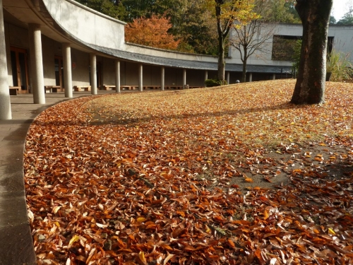 『自然史博物館で素敵な秋のひとときはいかが?』